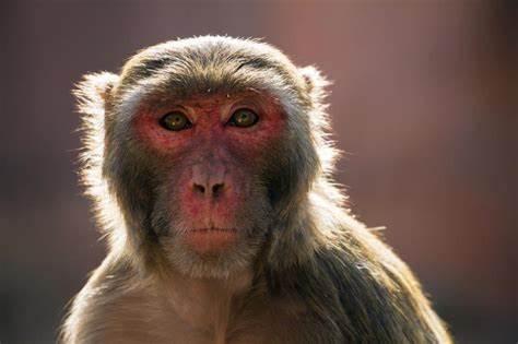 李兴球Python自动抠图后monkey.png